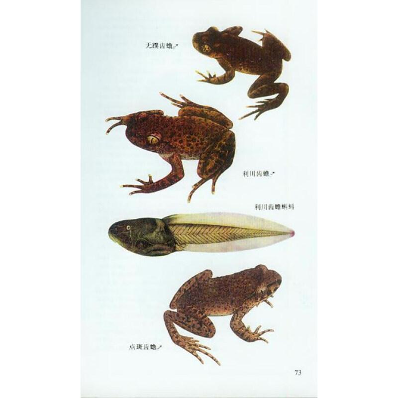 中国两栖动物图鉴(彩图珍藏版)
