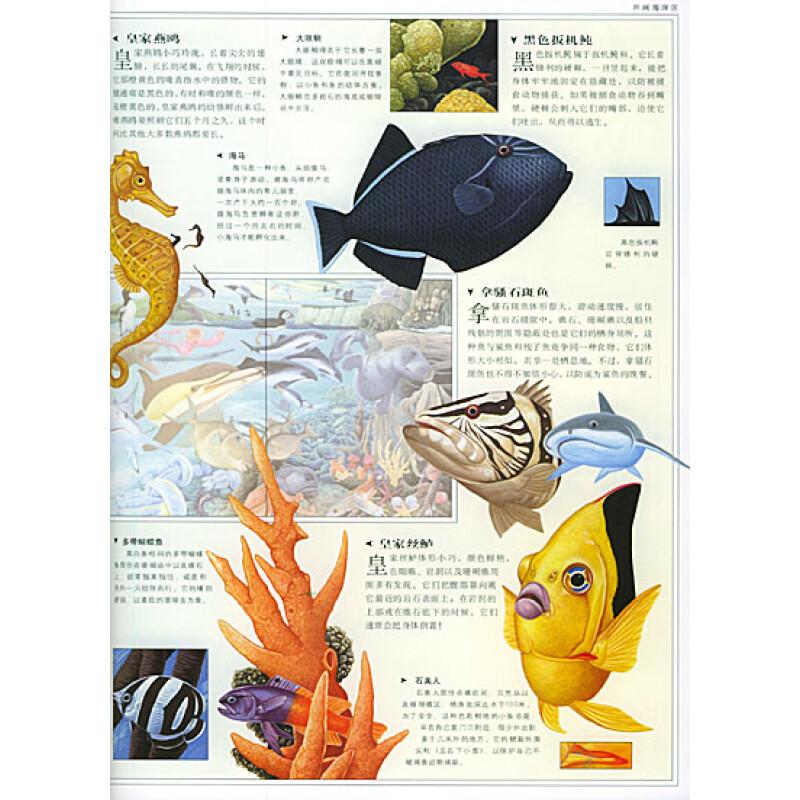 海洋动物:探索海洋动物世界的奥秘