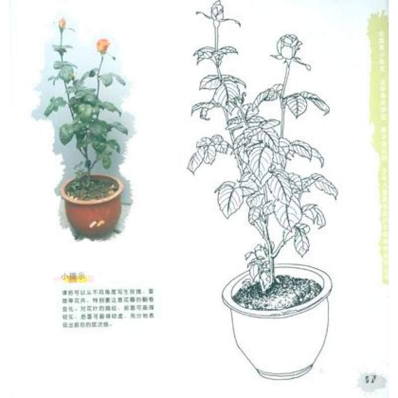 全国青少年宫·少年儿童美术培训专用教材系列丛书:线描植物树木写生