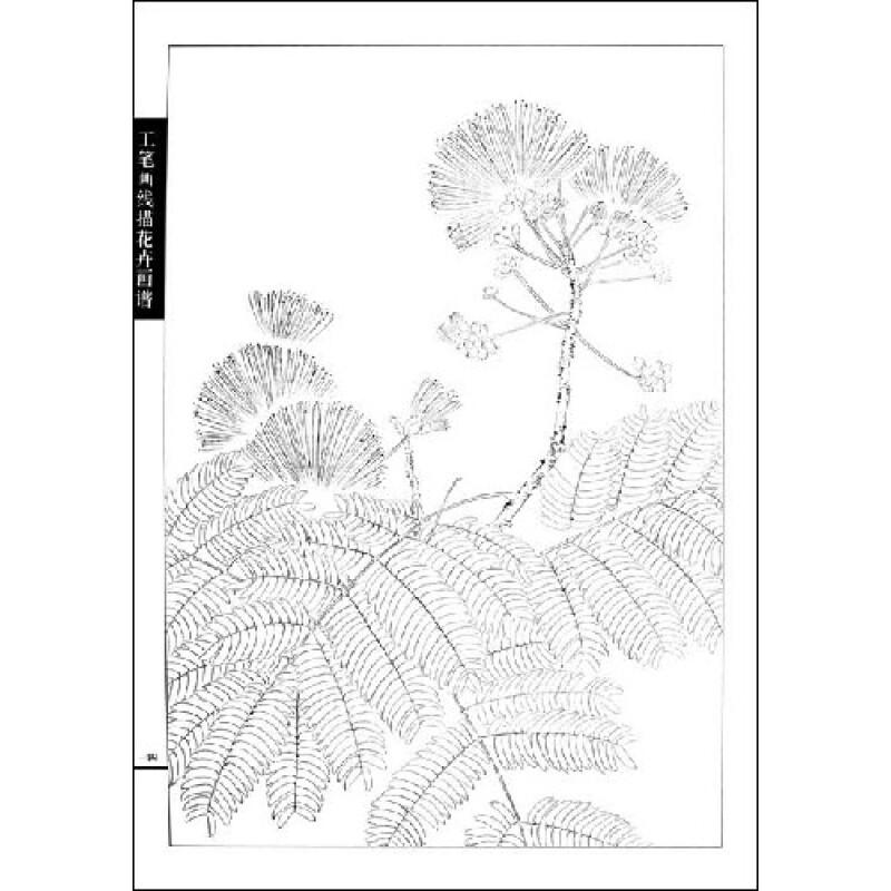 工笔画线描花卉画谱:合欢篇