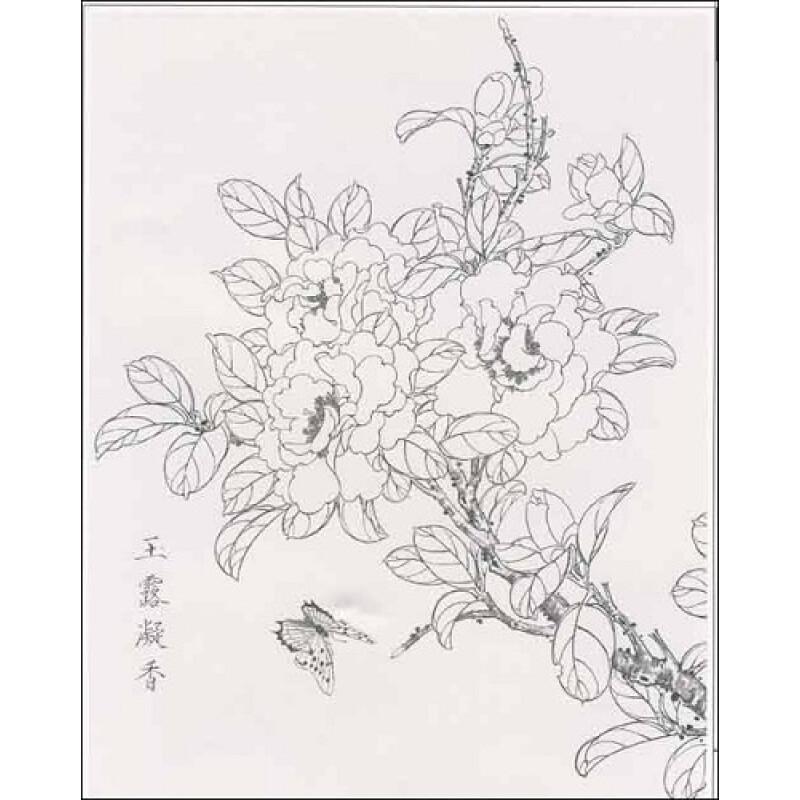 茶花手绘背景图片