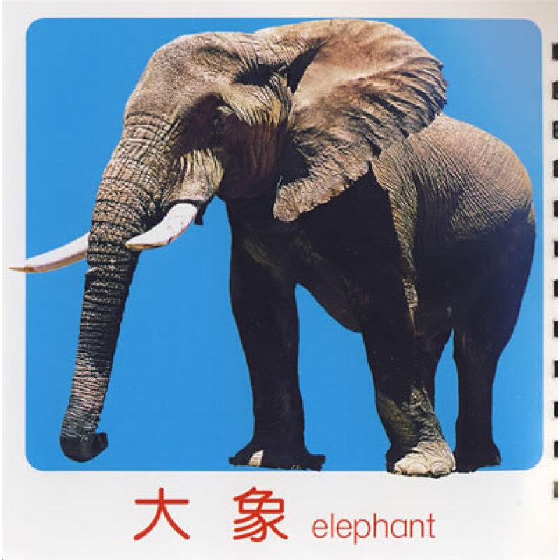 大象 动物 800_800
