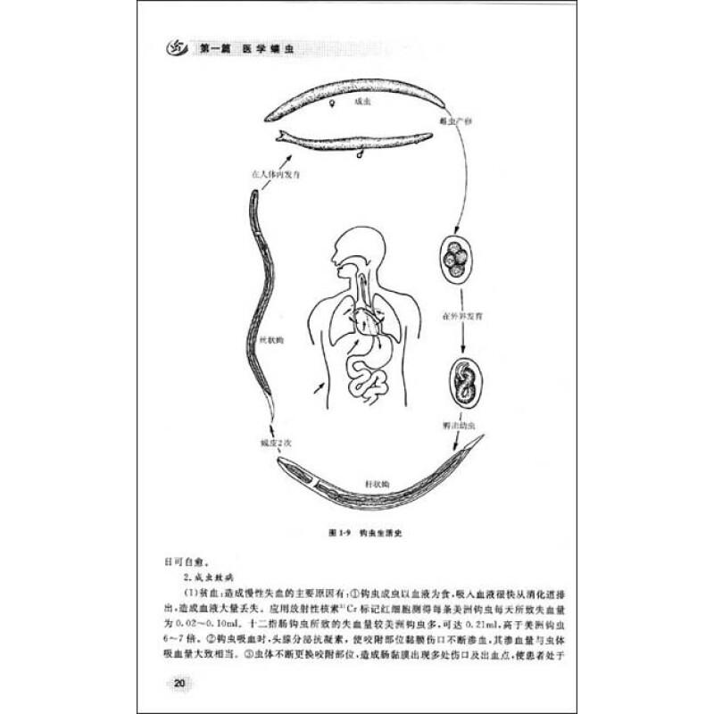 绦虫卵形态结构图