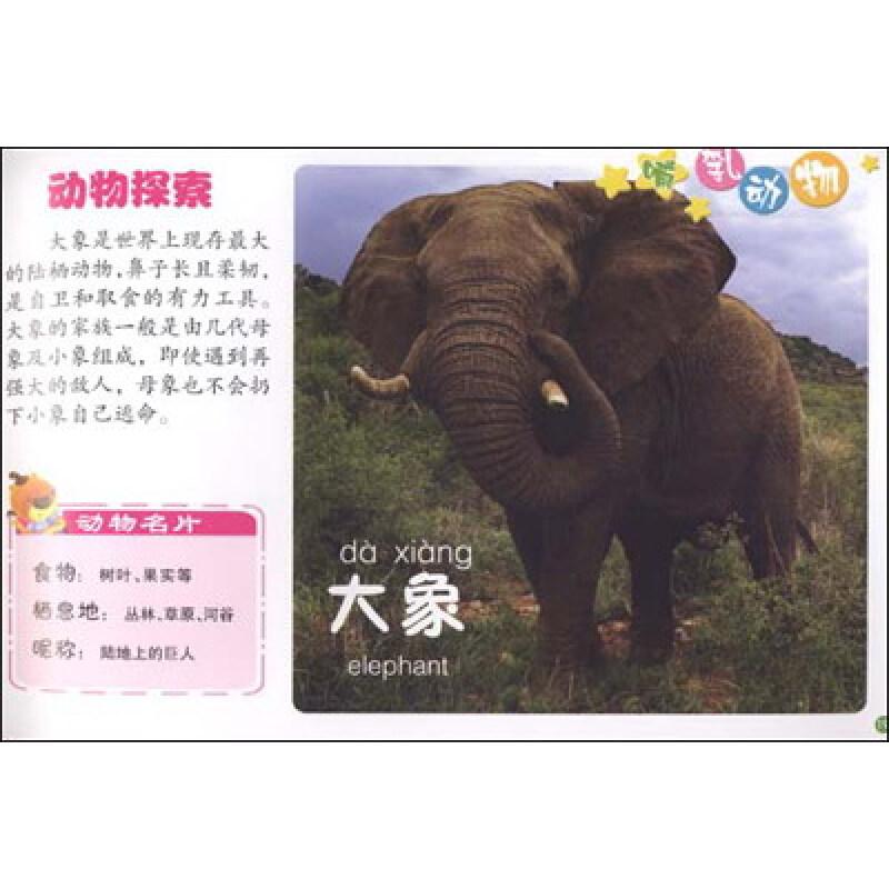 大象 动物 狗 狗狗