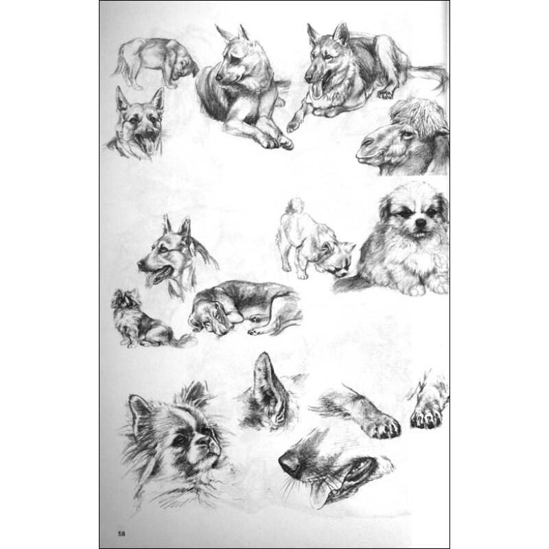 中国美术院校教材 工笔走兽画