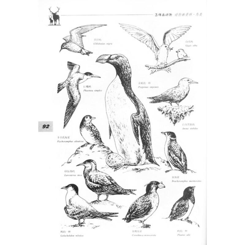 生物绘画基础:怎样画动物(第2版)