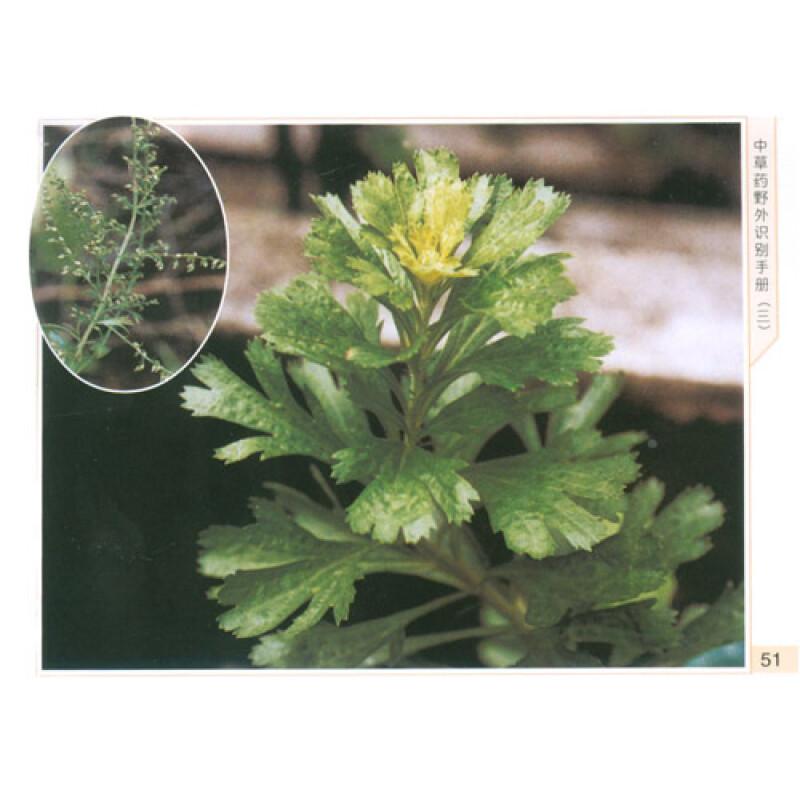 水杨梅(水石榴,小叶团花
