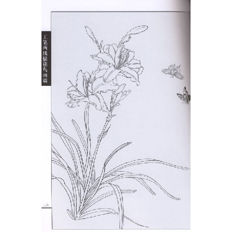《工笔画线描花鸟画谱(蝴蝶篇)》【摘要