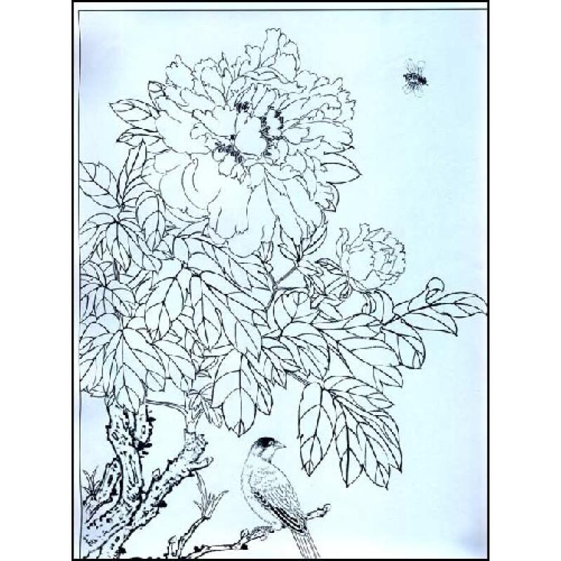 美术教学示范作品:玉兰牡丹白描画稿