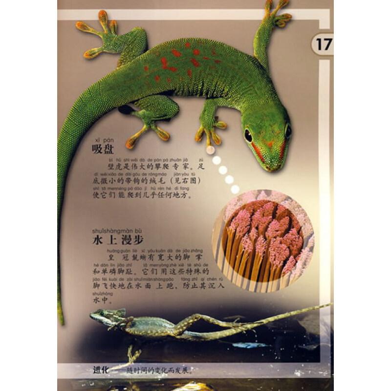 成长 自我保护 晰蜴和巨晰 有毒的爬行动物 制作晰蜴披风 制作立体