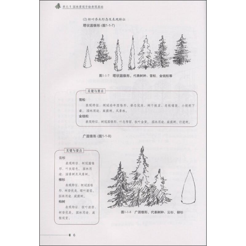 园林手绘树木彩铅