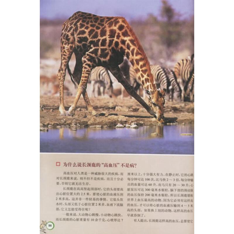 为什么河马不属于水生哺乳动物