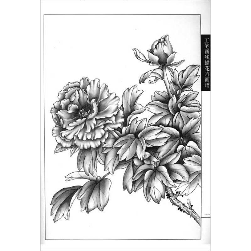 工笔画线描花卉画谱:牡丹篇报价