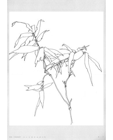 线描:吉瑞森画竹