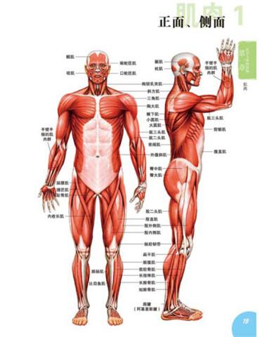 人体卡通示意图