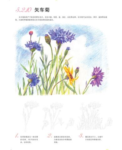 《飞乐鸟的色铅笔手绘世界:花卉入门篇》(飞乐鸟)