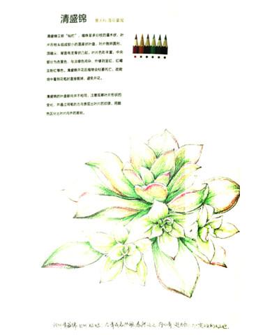 《最手绘·绘多肉:多肉植物经典彩铅手绘图解》