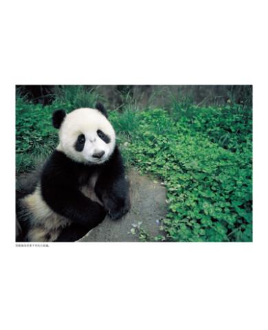 豆子粘贴画熊猫图片大全