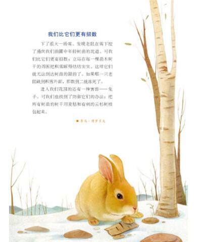 森林报秋的手抄报分享展示