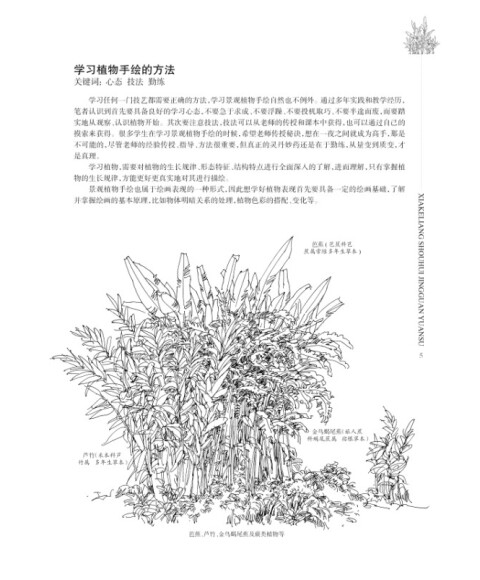 夏克梁手绘景观元素:植物篇(上)