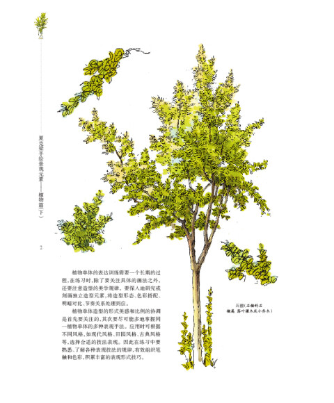 夏克梁手绘景观元素:植物篇(下)
