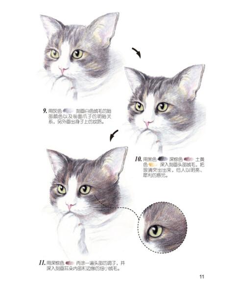 壁纸 动物 猫 猫咪 小猫 桌面 479_580