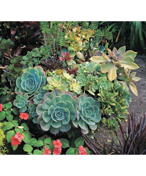 卓越手绘单体植物