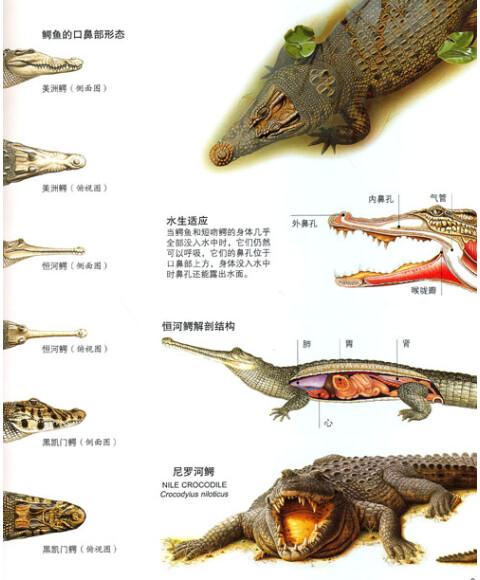 探索百科:爬行,两栖类动物