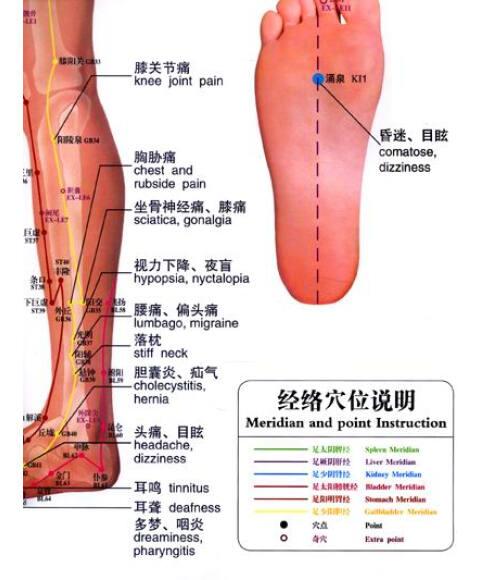 足腿部针灸经络穴位按摩挂图(中英文版)(防水撕不烂升级版)