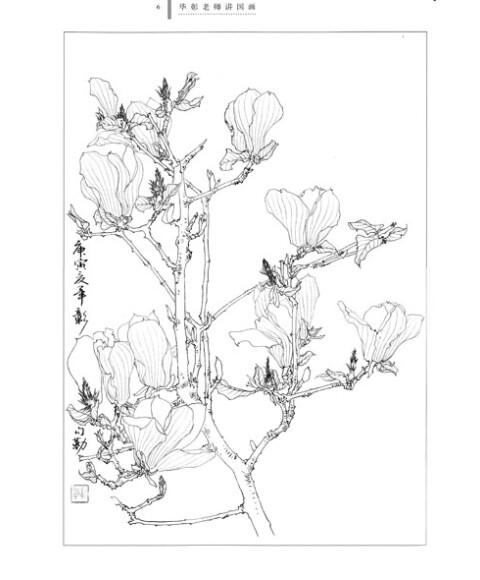 《毕彰老师讲国画:工笔花卉白描技法》(毕彰)【摘要