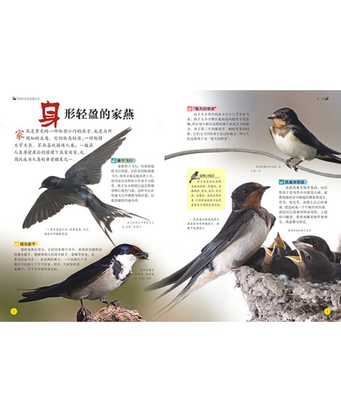 非常好看的动物百科 鸟类 昆虫