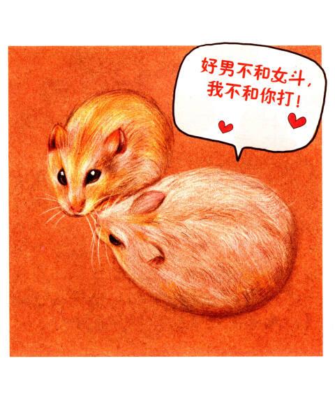 仓鼠日记(第1季):仓鼠宝宝诞生记4(纯彩铅绘本)