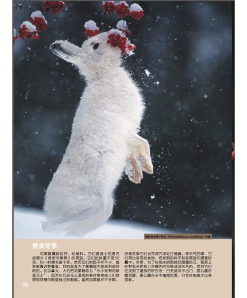 动物之美:严寒生存术
