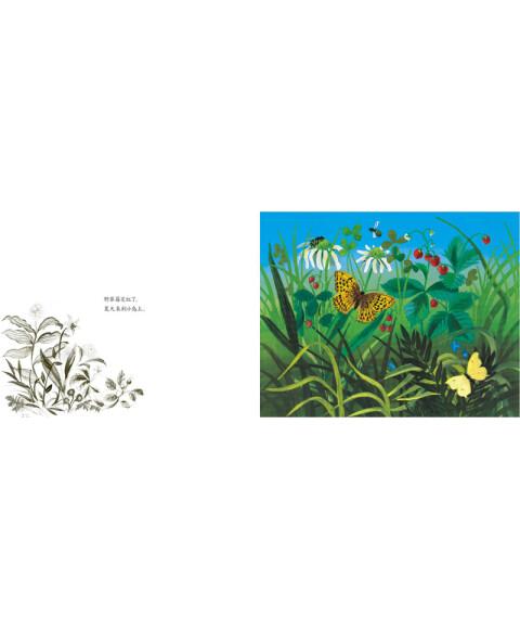 蒲蒲兰绘本馆:小岛