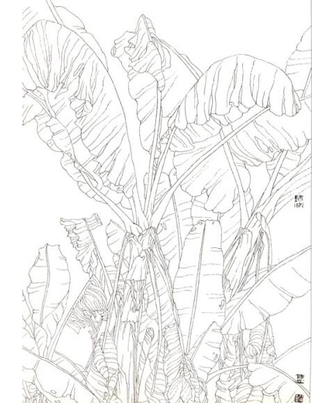 中国工笔画参考:线描芭蕉图片