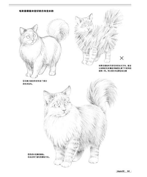 动物铅笔素描基础入门