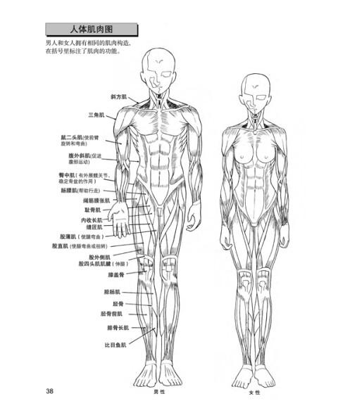 人物身体的画法 日本漫画手绘技法经典教程2