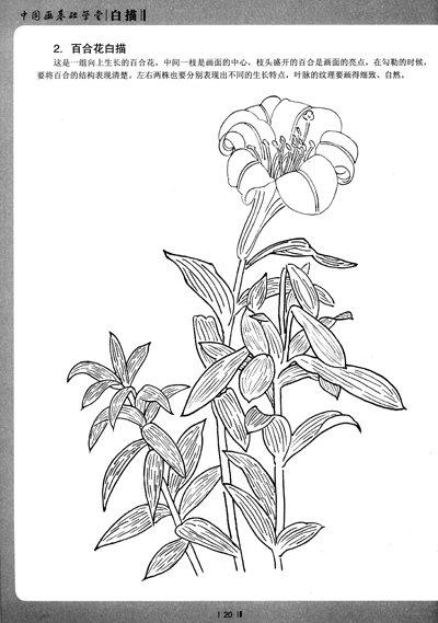 铅笔百合花卉的画法