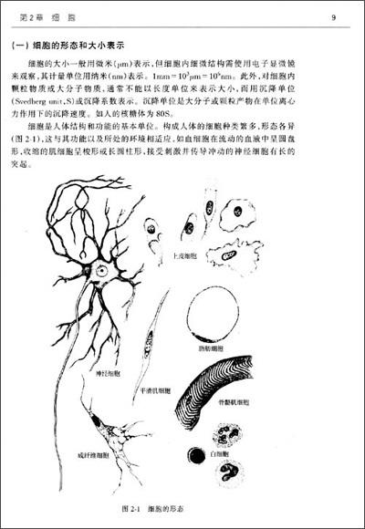 中等动静脉手绘图组胚