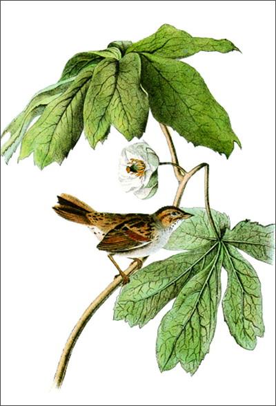 鸟类之书:世界大师手绘经典(e)【图片