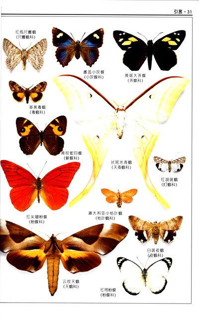 昆虫卡通手绘图鉴