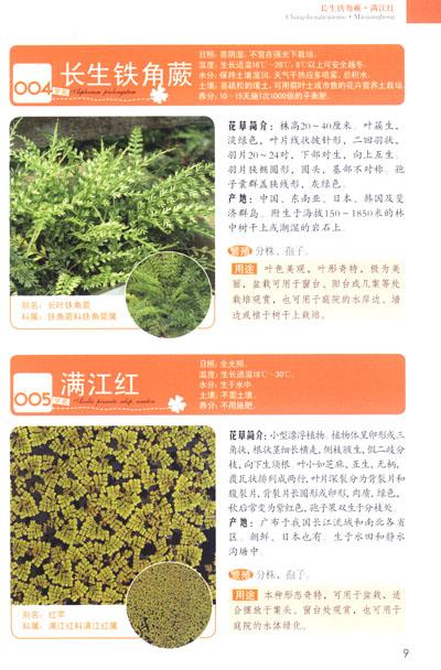 植物图例南洋杉手绘