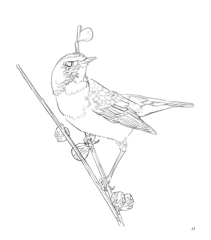 鸟儿图片简笔画