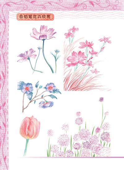 色铅笔绘画之旅——梦幻花卉