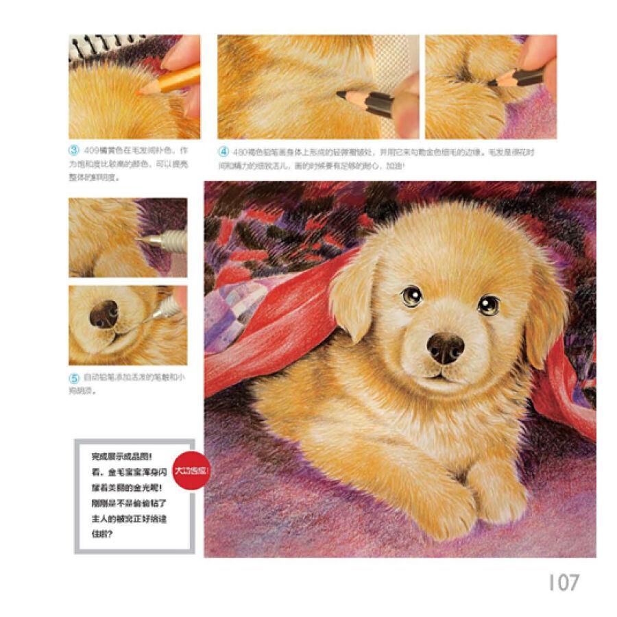 色铅笔之萌宠爱犬 色铅笔素描书籍 素描基础教程绘画入门静物填色学