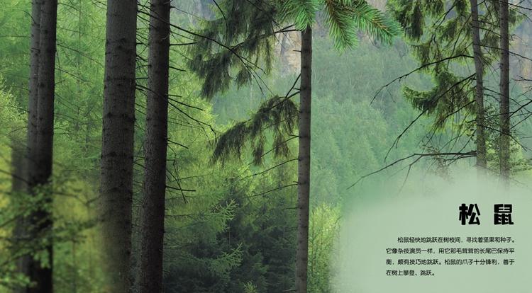 穿越自然互动立体发声书:奇境森林(精装) 趣味立体翻翻书 3d立体发声图片
