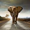 Пользовательский размер Слон фотографический фон 3D-фотообои Обои Гостиная Спальня Напечатанные обои Murales De Pared 3D