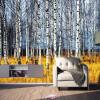 Фото обои красивый осенний сон береза лес коридор проход стерео гостиная лобби ванная обои обои лобби ресторан
