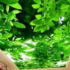 Большие пользовательские 3D обои Mural Обои Зеленые листья Потолочные фрески Стены Картина Живопись Гостиная Спальня Потолочные фоны Обои 3D