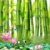 Пользовательские обои для рабочего стола 3D для стен 3 D Lotus Flower Bamboo Forest Wall Painting Гостиная Спальня Mural Обои Домашний декор декор для стен